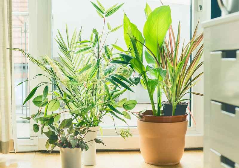 цветы очищающие воздух в комнате фото так